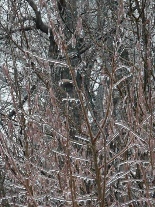 January 14, 2015 ice storm 003