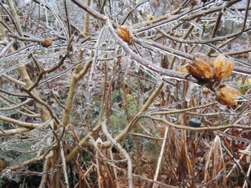 January 14, 2015 ice storm 033