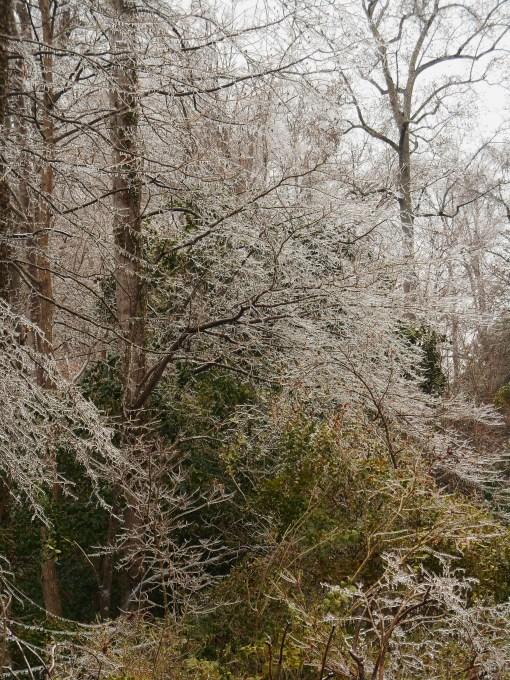 January 14, 2015 ice storm 053