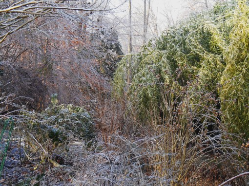 January 15, 2015 ice garden 012
