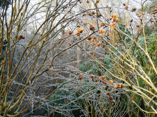 January 15, 2015 ice garden 019