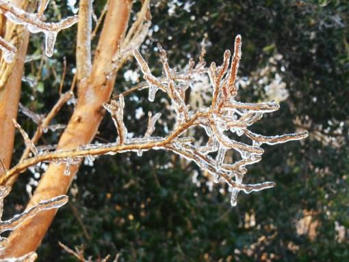 January 15, 2015 ice garden 020