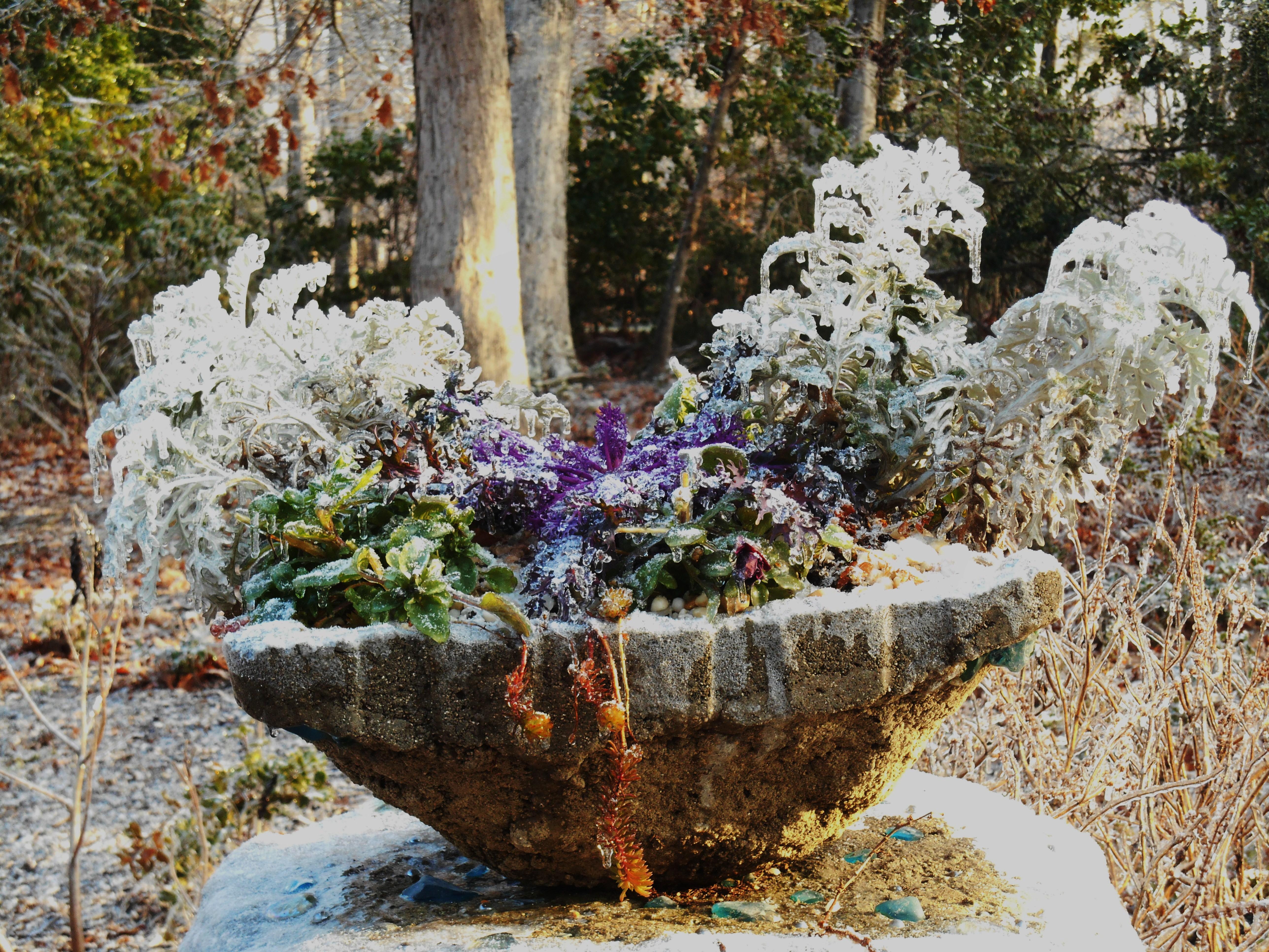 January 15, 2015 ice garden 028