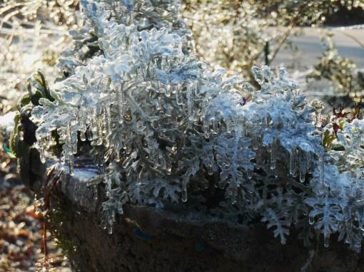 January 15, 2015 ice garden 032