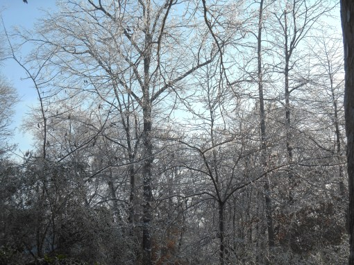 January 15, 2015 ice garden 062