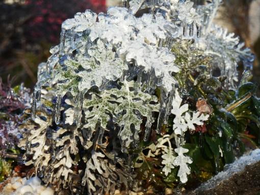 January 15, 2015 ice garden 073