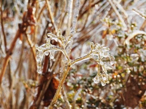 January 15, 2015 ice garden 100