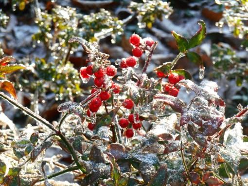 January 15, 2015 ice garden 103