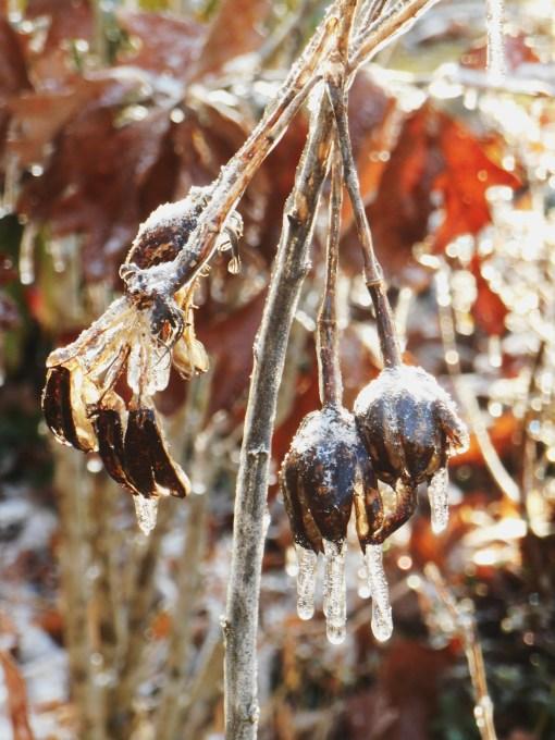 January 15, 2015 ice garden 115