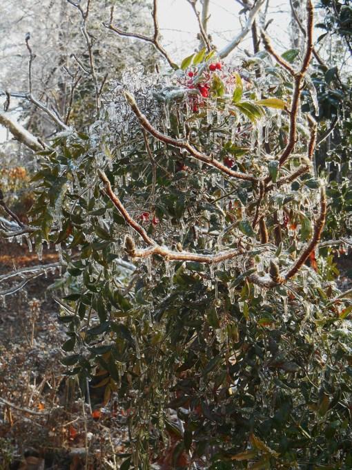 January 15, 2015 ice garden 119