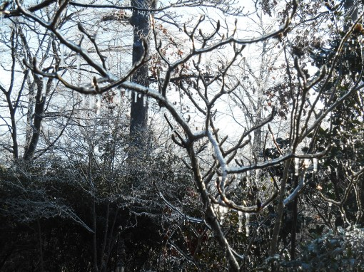 January 15, 2015 ice garden 120