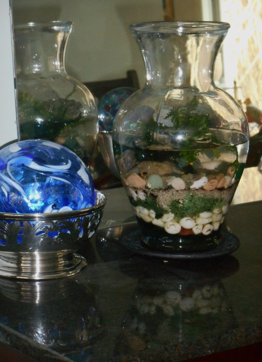 January 16, 2015 terrarium 001