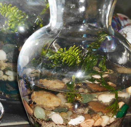 January 16, 2015 terrarium 005