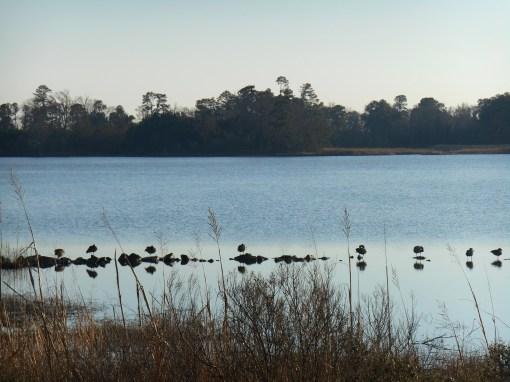 January 23, 2015 birds 008