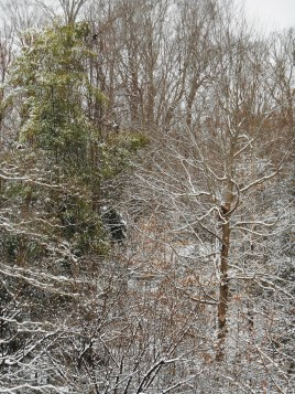 January 27, 2015 snow 001