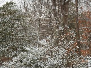 January 27, 2015 snow 012