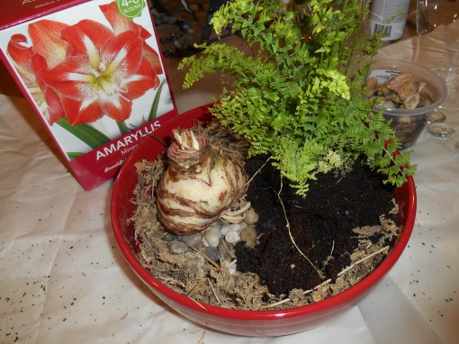 The fern's pot is also deeper than this bowl.  I gently pulled the roots of the fern out to the side to make it fit.  This fern spreads with underground rhizomes.  Pulling it apart  in this way encourages it to spread more quickly.