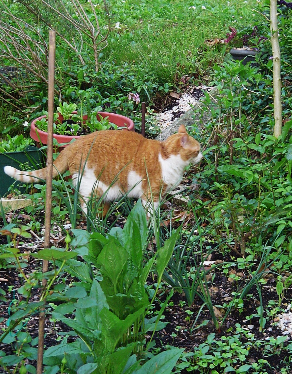 Some of those weeds are edible...