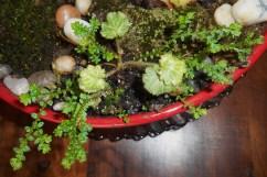 February 1, 2015 moss garden 008