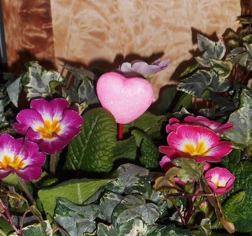 February 14, 2015 flower basket 003