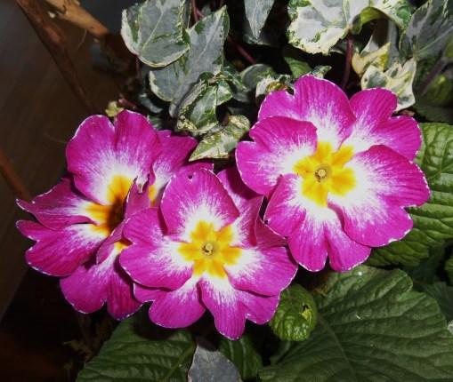 February 14, 2015 flower basket 004