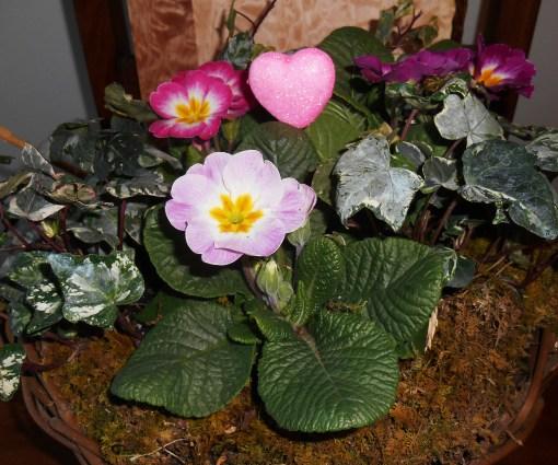 February 14, 2015 flower basket 006