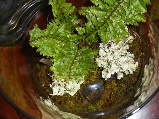 February 18, 2015 fern garden 004