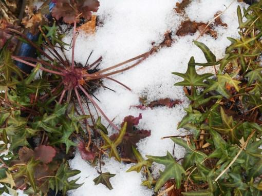 February 25, 2015 snow melt 001
