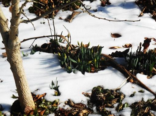 February 25, 2015 snow melt 018