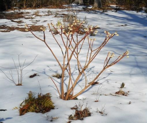February 25, 2015 snow melt 021