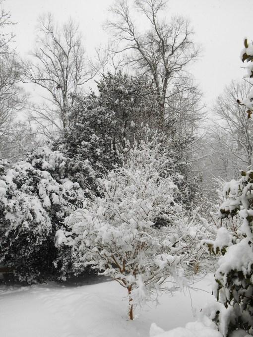 February 26, 2015 snow 008
