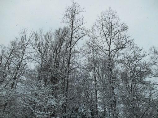 February 26, 2015 snow 010