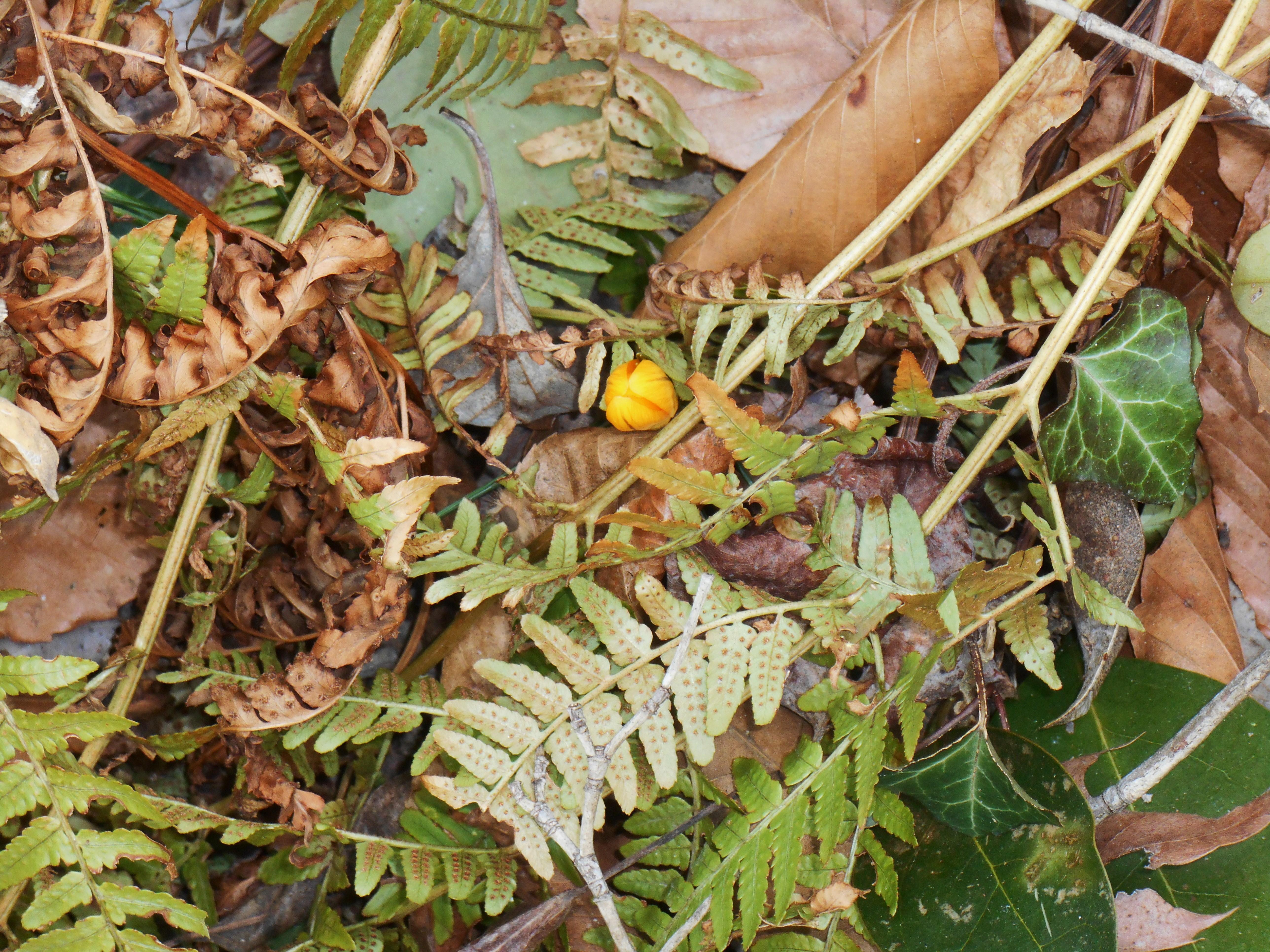 One Word Photo Challenge: Beaver (Brown) | Forest Garden
