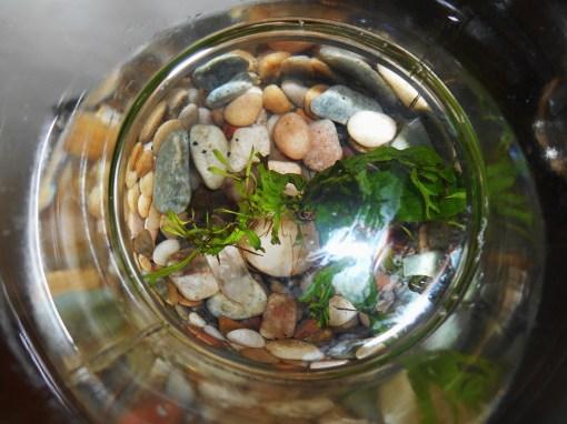 march 19 vase2 001