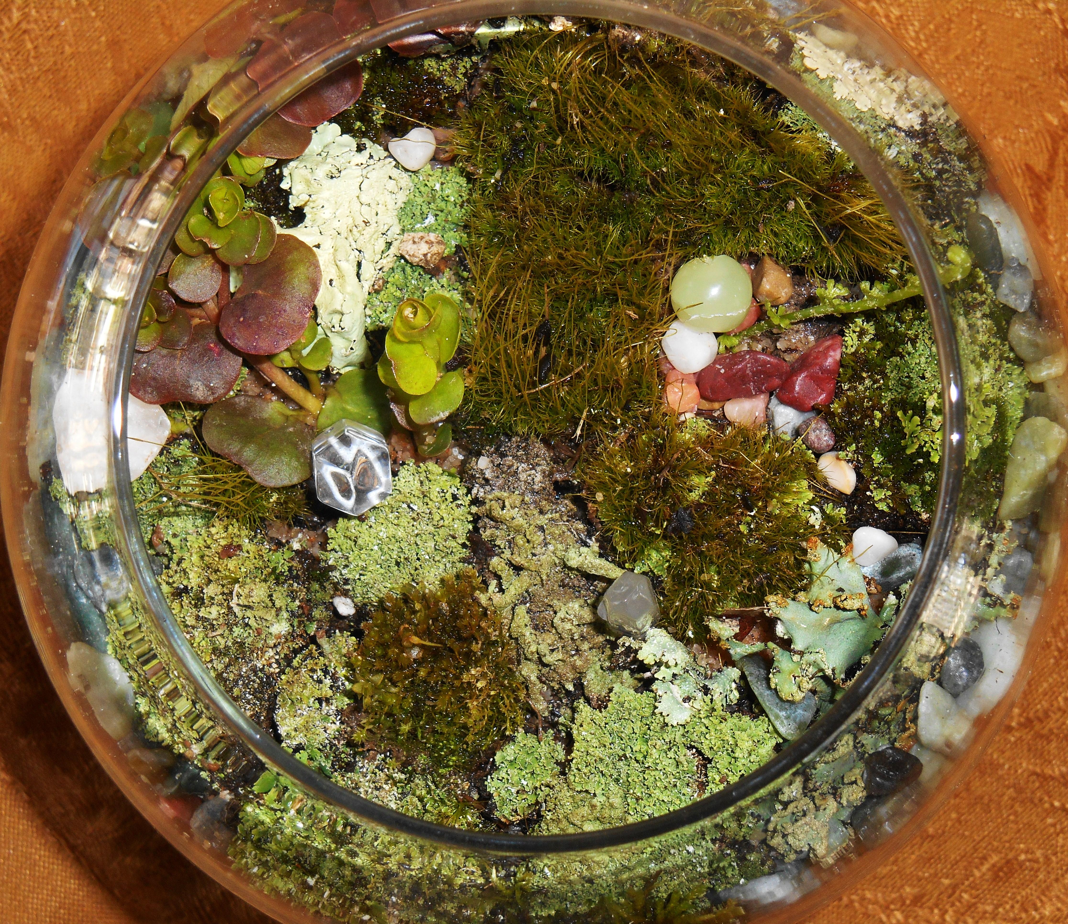 March 21, 2015 moss garden 003