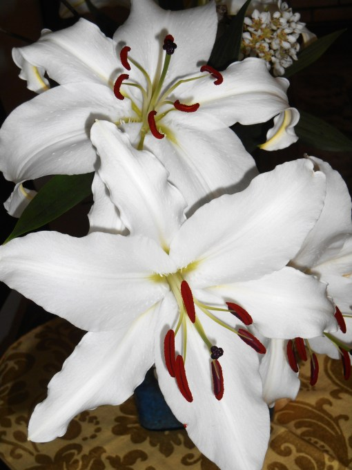 March 39, 2015 lilies 004