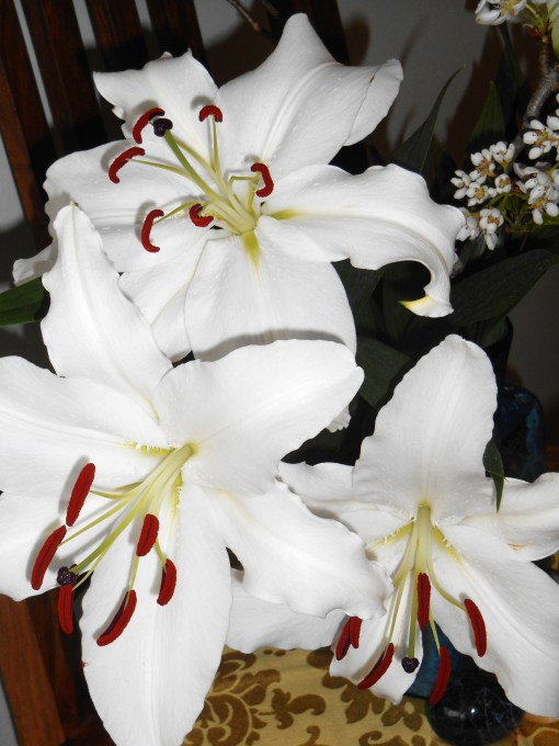 March 39, 2015 lilies 005