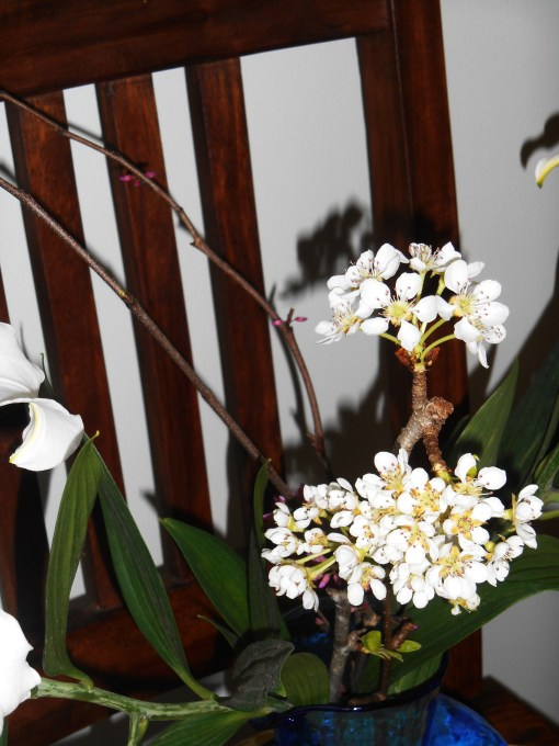 March 39, 2015 lilies 006
