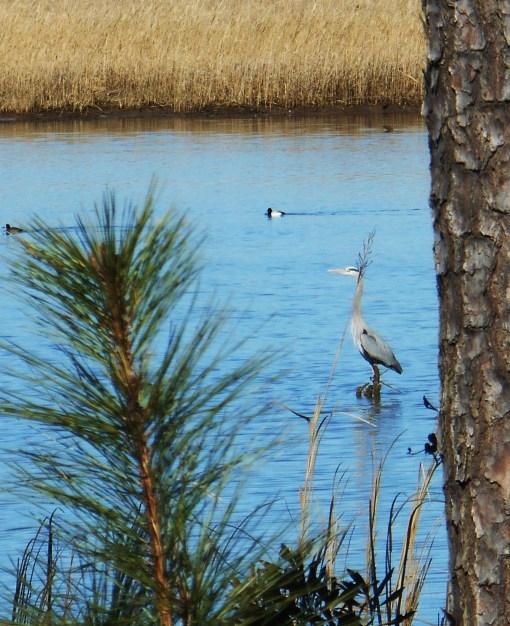 March 6, 2015 birds 035