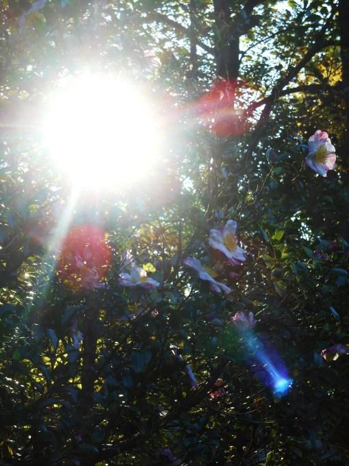 October 17, 2014 light 007