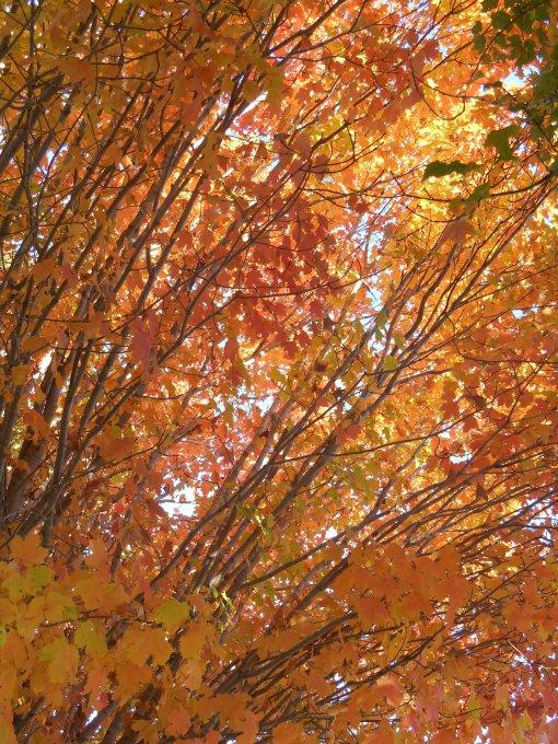 October 28, 2014 fall color 084