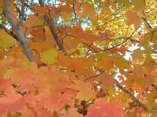 October 28, 2014 fall color 087