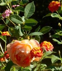 October 8, 2014 garden 005