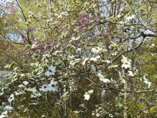 April 12, 2015 flowers 016