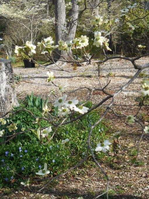 April 12, 2015 flowers 019