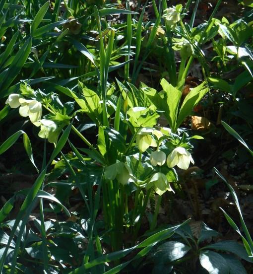 April 12, 2015 flowers 035