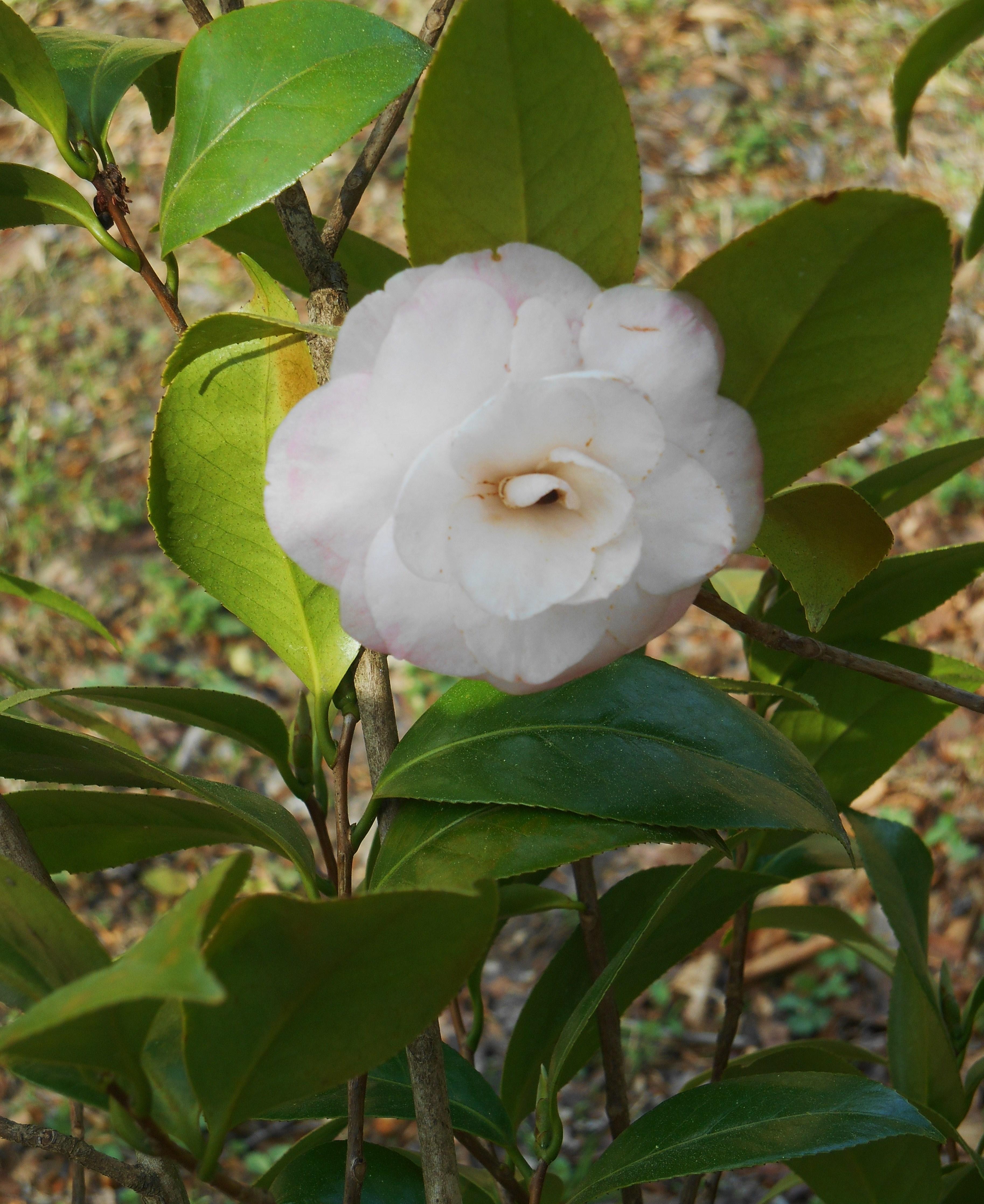 Today April Flowers: April 12, 2015 Flowers 064
