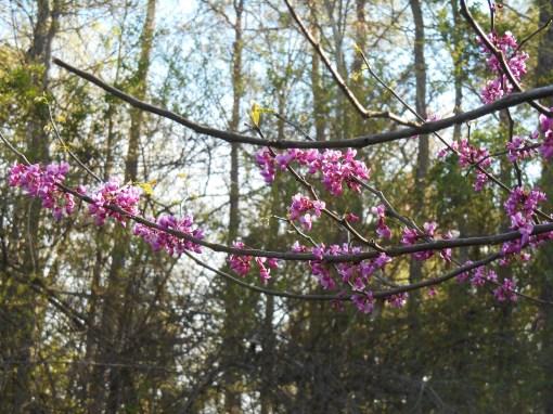 April 12, 2015 flowers 081