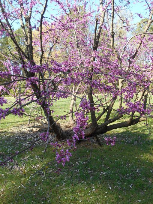 April 12, 2015 flowers 083