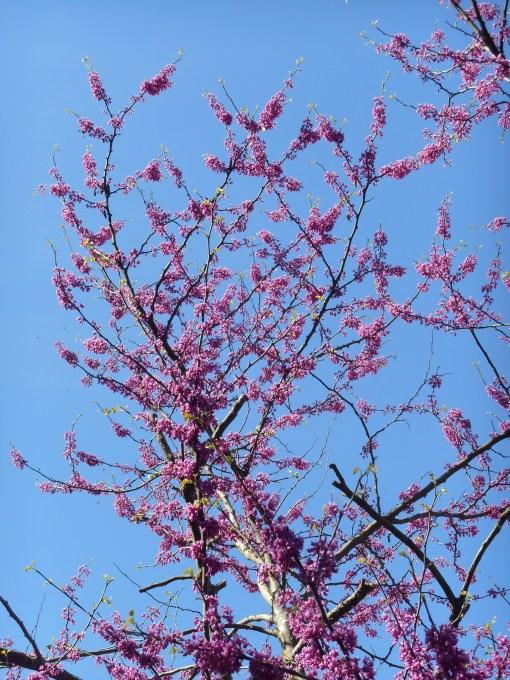 April 12, 2015 flowers 085